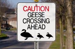 鹅横穿标志 库存图片