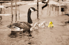 鹅母亲 免版税库存照片