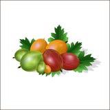 从鹅莓和叶子设置 库存照片