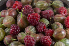 鹅莓和莓在背景 免版税库存照片