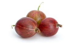 鹅莓宏观红色射击三 库存照片