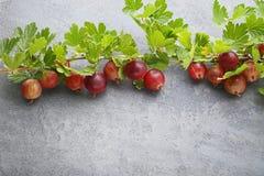 鹅莓果子 免版税图库摄影