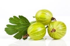 鹅莓特写镜头莓果  与绿色叶子的成熟水多的甜莓果 免版税库存照片