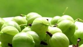 鹅莓的新鲜的莓果 循环 鹅莓 股票录像