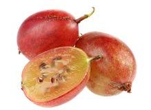 鹅莓红色 免版税库存图片