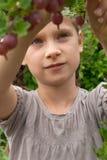 鹅莓 库存照片