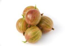 鹅莓 免版税库存图片
