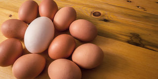 鹅蛋用被塞的鸡蛋 新鲜 库存图片