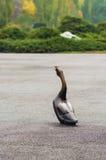 鹅雕象 免版税库存照片