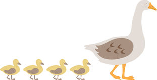 鹅&鸭子 免版税库存图片