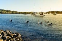 鹈鹕和小船在Myall湖 免版税库存照片