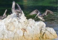 鹈鹕岩石 免版税库存照片