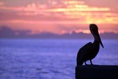 鹈鹕海洋日落颜色 免版税库存照片