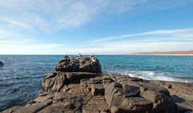 鹈鹕群在岩石的在喜瑞都在蓬塔罗伯斯靠岸在下加利福尼亚州墨西哥 图库摄影