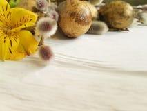 鹌鹑倒空在自然装饰白色木背景的蛋复活节分支美丽的概念杨柳,花德国锥脚形酒杯 库存图片