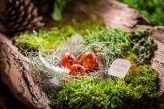 鹌鹑复活节彩蛋在日出的森林里 免版税库存照片