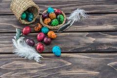 鹌鹑复活节彩蛋构成 库存照片
