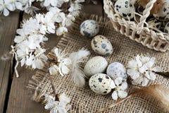 鹌鹑蛋、花和羽毛 库存图片