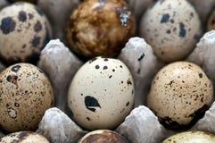 鹌鹑蛋充分的框架、宏指令和特写镜头 库存图片