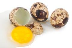 鹌鹑蛋卵黄质蛋白质 库存图片