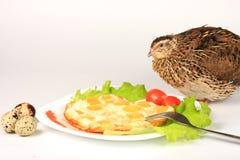 从鹌鹑蛋和活鹌鹑爱沙尼亚语品种的炒蛋 库存照片