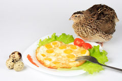从鹌鹑蛋和活鹌鹑的炒蛋 免版税库存图片