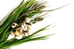 鹌鹑蛋在新鲜的草说谎 免版税库存照片
