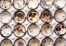 鹌鹑蛋 免版税库存图片