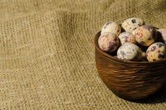 鹌鹑鸡蛋 免版税图库摄影