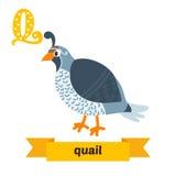鹌鹑 Q信件 逗人喜爱的在传染媒介的儿童动物字母表 滑稽 免版税图库摄影