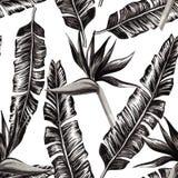 鹤望兰和黑白香蕉的叶子 库存照片