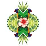 鹦鹉、植物和木槿开花白色背景 免版税库存图片