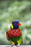 鹦鹉公园彩虹 库存图片
