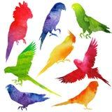 鹦鹉剪影 水彩 免版税库存图片