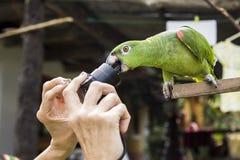 鹦鹉叮咬 免版税图库摄影