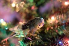 鹦鹉和圣诞树 免版税库存图片