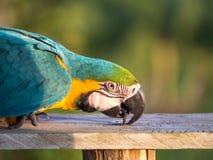 鹦鹉在密林 免版税库存图片
