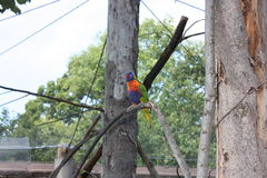 鹦鹉在布拉格动物园里 库存图片
