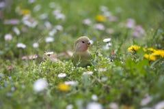 鹦鹉在春天 库存照片