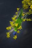 鹦鹉在植物园里 免版税图库摄影