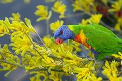 鹦鹉在植物园里 库存图片
