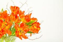鹦鹉在玻璃花瓶的郁金香安排 免版税图库摄影