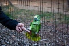 鹦鹉握手 免版税库存图片