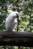 鹦鹉白色 库存照片