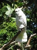 鹦鹉白色 库存图片