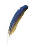 鹦鹉的一根唯一羽毛 图库摄影
