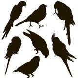 鹦鹉的剪影许多个体 免版税图库摄影
