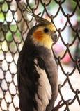 鹦鹉的Portrain 图库摄影