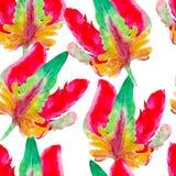 鹦鹉郁金香花水彩无缝的样式 在白色背景隔绝的明亮的热带花 免版税库存图片