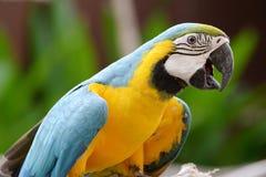 鹦鹉鸟 免版税库存照片
